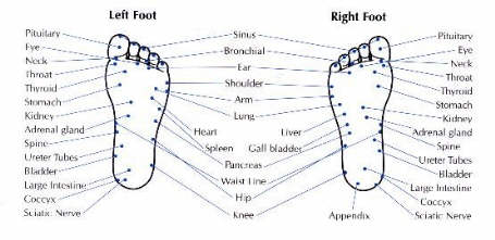 Feet reflex areas